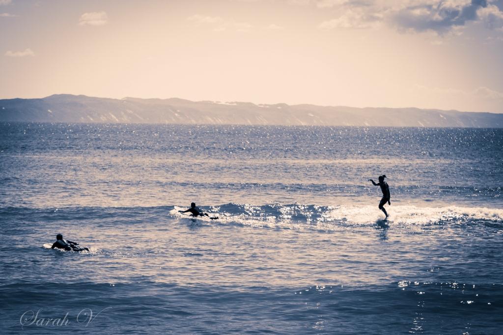 Noosa surfers